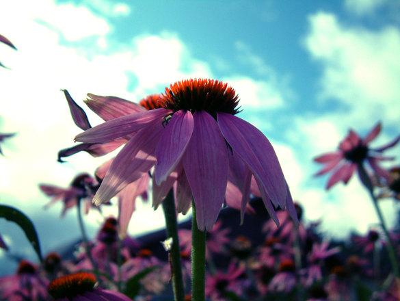 pretty-flower-1462707.jpg